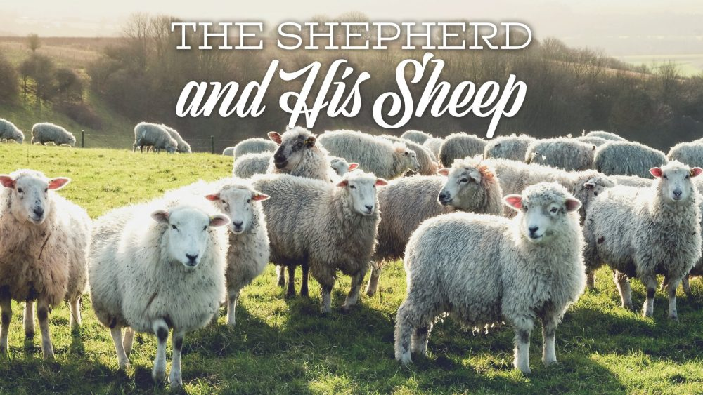 The Shepherd & His Sheep Image